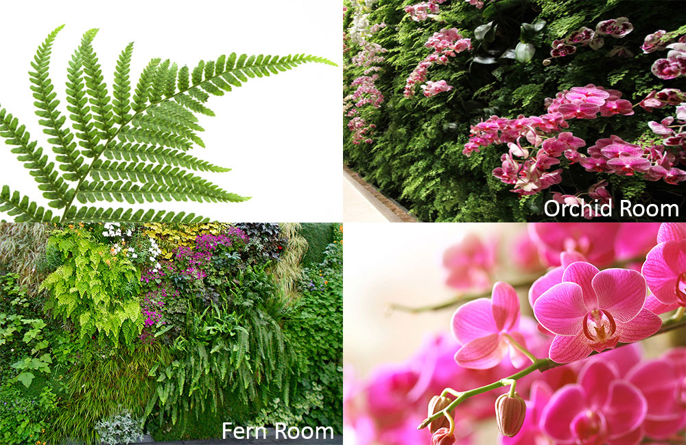 Linc Garden Rooms : Living Rooms : Planted Living Orchid Wall